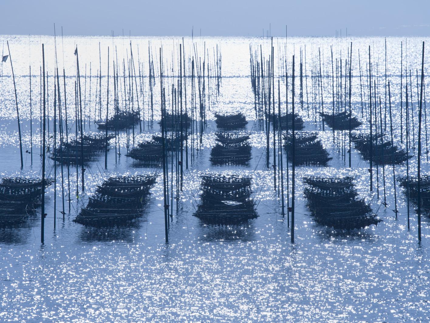 日本最大の海苔生産地「有明海」